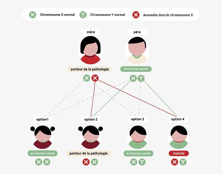 Infographie sur l'hérédité de la maladie de Duchenne